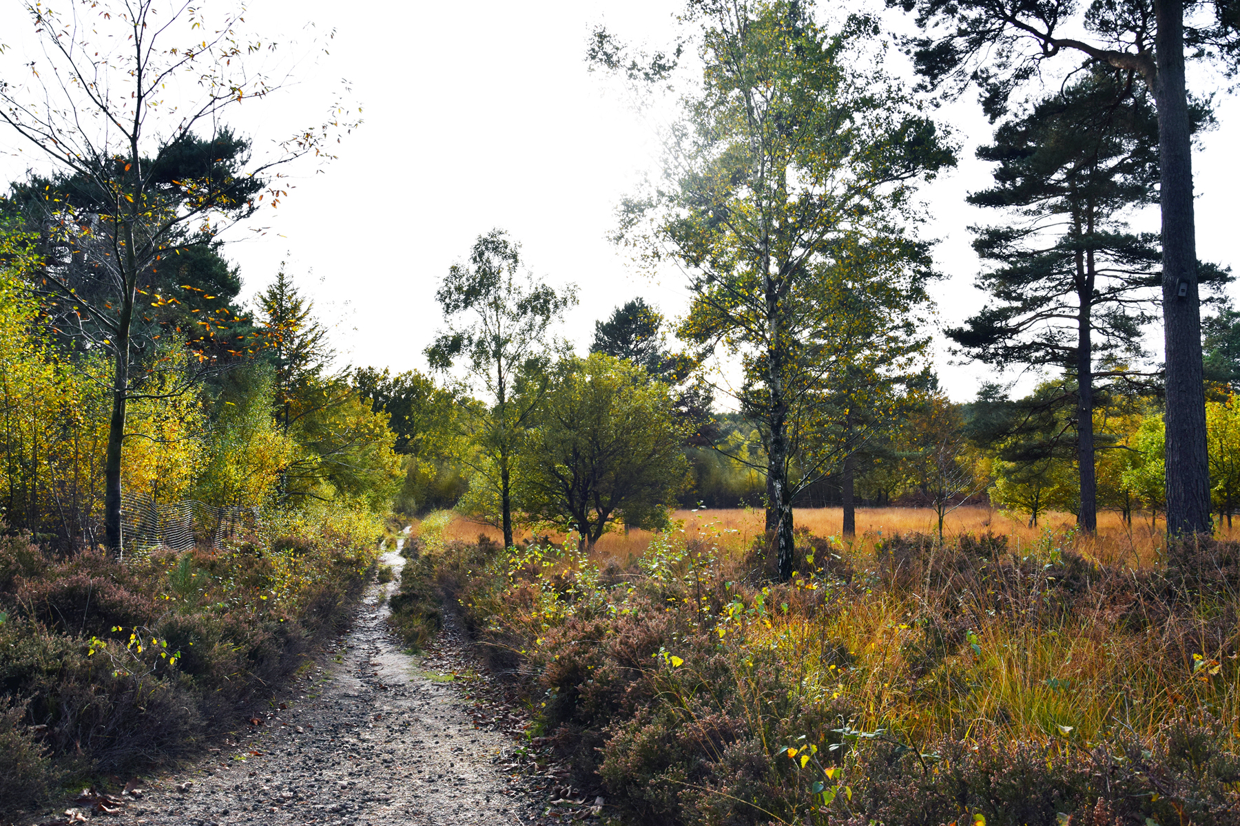 Gallery-Jan-Spruce-Hill-Coppice-Buchan-Park-West-Sussex