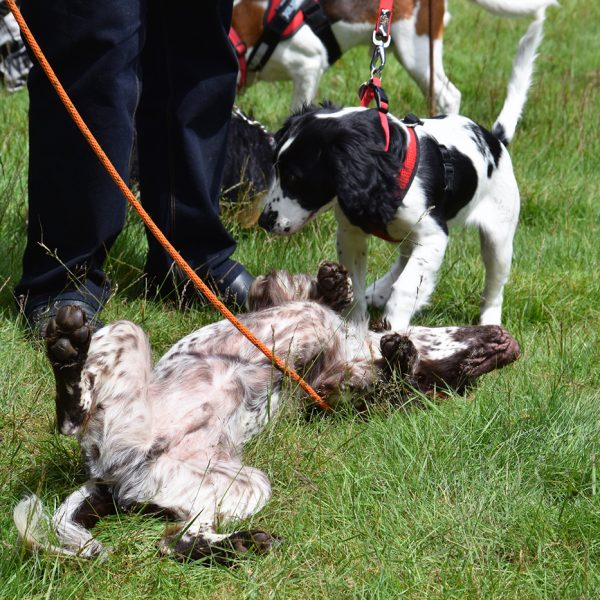 Friends of Buchan Country Park Fun Dog Show 2016 | fobcp.org.uk